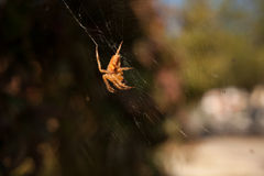 An arachnid sits in its lair. Outdoors Stock Images