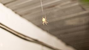 Arachnid Sitting in Its Lair. Timelapse of a spider's web stock video footage