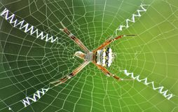 Arachnid Stabilimentum. Found this Argiope of the spider family shrouding the fly trapped by the web decorations. The zig zag web decoration is meant to attract stock photos