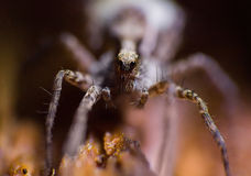 arachnide photographie stock