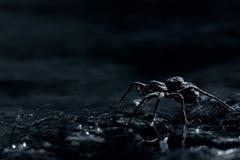 arachnofobia Zdjęcia Royalty Free