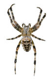 Arachnophobia Royalty Free Stock Photo