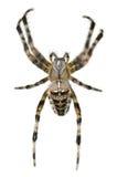 arachnophobia Στοκ φωτογραφία με δικαίωμα ελεύθερης χρήσης