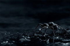 Arachnophobia. Dark, evil macro of a spider crawling along the banks of a stream. arachnophobia - the fear of spiders Royalty Free Stock Photos