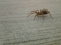 arachnophobia Стоковое Изображение