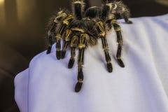 arachnophobia lizenzfreie stockfotos