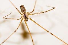 Arachnophobia Royalty Free Stock Photography