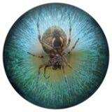 Arachnophobia-Spinne in Ihrem Anblick lizenzfreie stockfotos