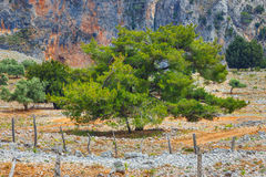 Aradena Gorge, Crete Island Stock Photo