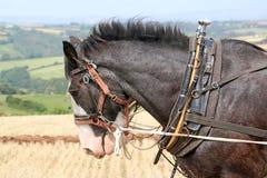 Arado de los caballos de condado imagen de archivo libre de regalías