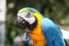 Arafågel i trädgård Arkivfoto