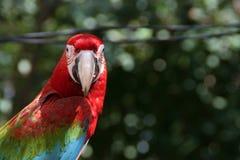Arafågel i trädgård Royaltyfri Foto