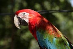 Arafågel i trädgård Royaltyfria Foton