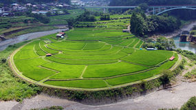 Aragijima Terraced Rice Field in Wakayama, Japan Royalty Free Stock Photography