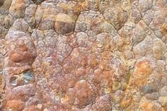 Aragonite vägg i naturen, råvara Royaltyfri Fotografi