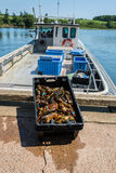 Aragosta dell'isola Fotografia Stock Libera da Diritti