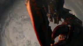 Aragosta messa in vaso di acqua archivi video