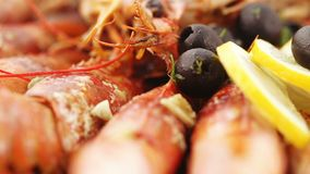 Aragosta norvegese con riso video d archivio