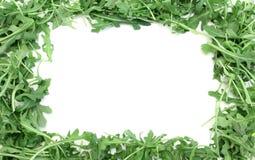 Aragula Feld Stockbilder
