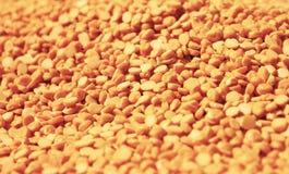 Arahar dal印地安人谷物 免版税库存照片