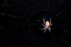 Araignée à jambes velue de champ Photos stock