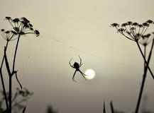 Araignée éclairée à contre-jour au lever de soleil Images libres de droits