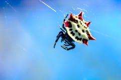 Araignée épineuse Image libre de droits