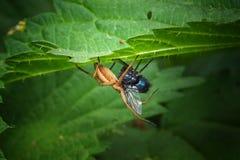 araignée Photos libres de droits