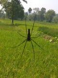 araignée images libres de droits