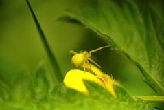 Araignée Photographie stock libre de droits