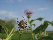 Araignée 1 Photo stock