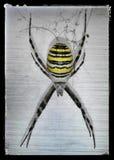 araignée Photo libre de droits