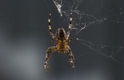 araignée Photos stock