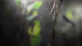 araignée clips vidéos