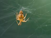 Araignée accrochante photographie stock libre de droits