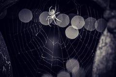 Araignée argentée Images stock