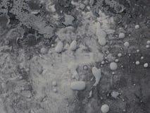 Araignée argentée Photo libre de droits
