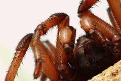 Araignée attendant la mise à mort Photos stock
