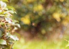 Araignée au centre du Web image stock