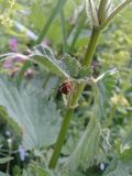 Araignée au-dessous de feuille d'ortie dans le pré ensoleillé Photo libre de droits