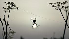 Araignée au lever de soleil Images libres de droits
