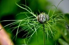 araignée bleue élégante mûre Photographie stock libre de droits