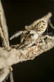 Araignée branchante Photographie stock libre de droits