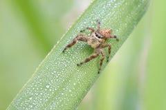 Araignée branchante Photo stock