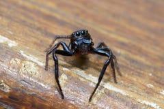 Araignée branchante Images stock