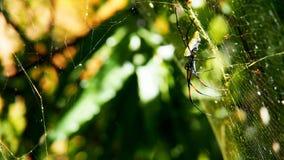 Araignée dans l'arbre Image stock