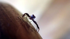 Araignée dans la macro photographie Photographie stock