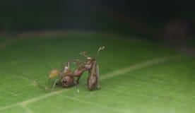 Araignée dans la nature photo libre de droits