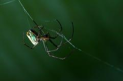 Araignée dans la toile d'araignée image stock