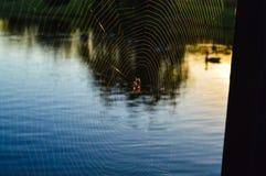 Araignée dans la toile d'araignée au-dessus d'un lac pendant les heures de début de la matinée Image libre de droits